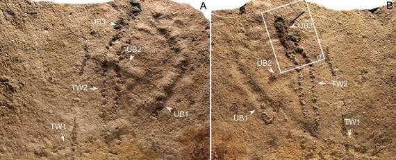 geologia, paleontologia, impronte fossili, cambriano, evoluzione, vita sulla terra