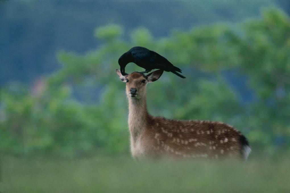 Cervi, macachi e sesso interspecie