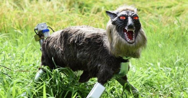 Il lupo robot che difende le coltivazioni