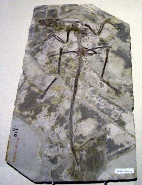 microraptor_zhaoianus