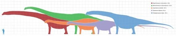 sauropodi, dinosauri erbivori a confronto