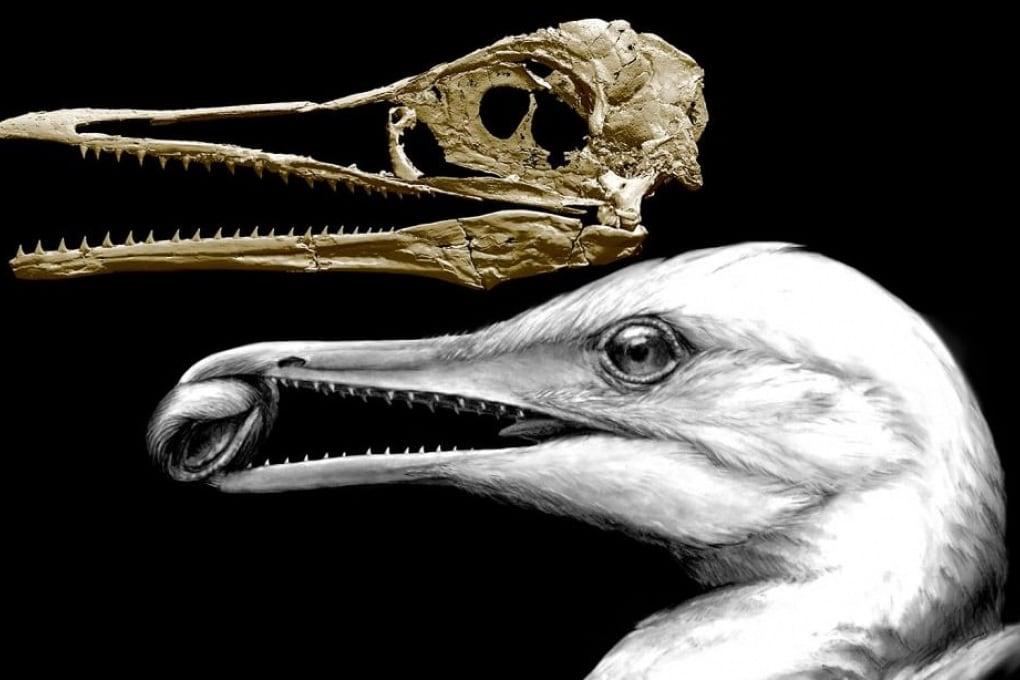 Da dinosauro a uccello: un insieme di fossili fotografa la transizione in corso