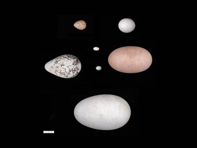 uova-apertura