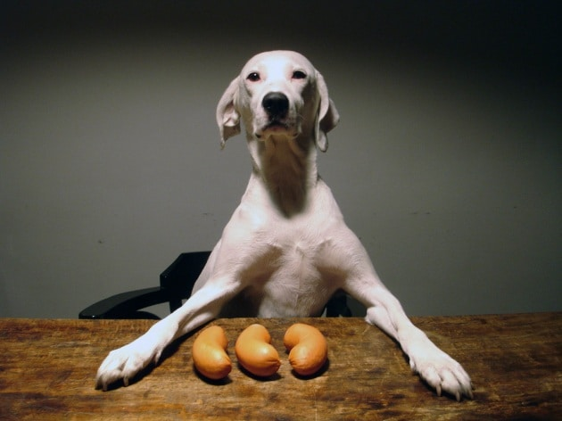 Anche i cani ci ingannano per interesse