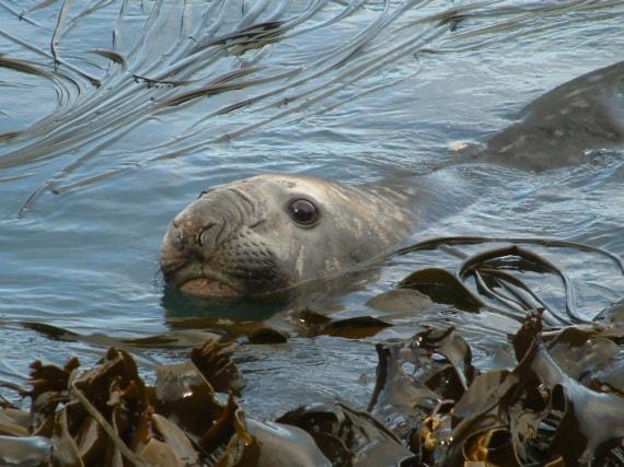 Antartide, alghe kelp, correnti oceaniche