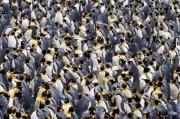 pinguini_reali