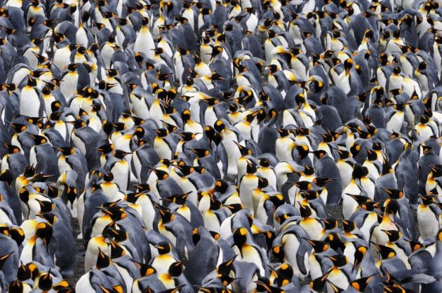 I pinguini reali: come molecole in un liquido
