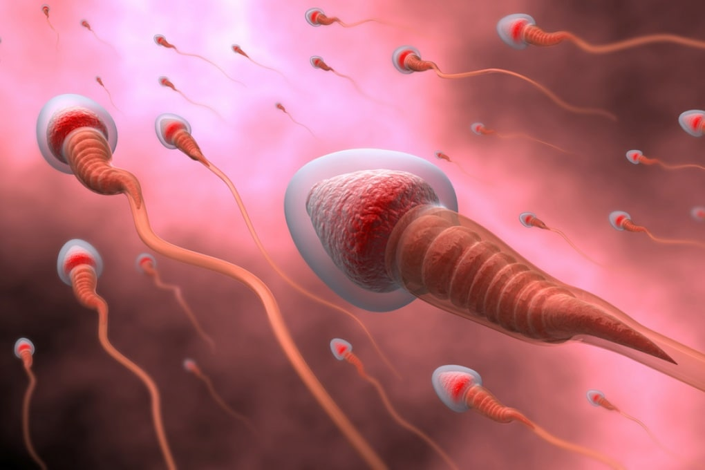 Gli spermatozoi hanno un'elica nella coda