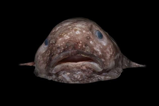 Le nuove bizzarre creature dei mari australiani