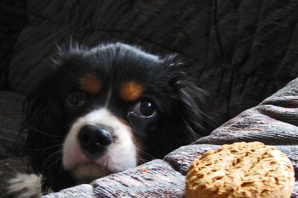 I cani sanno assumere il nostro punto di vista