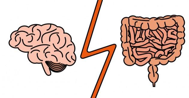 Lo strano collegamento intestino-cervello