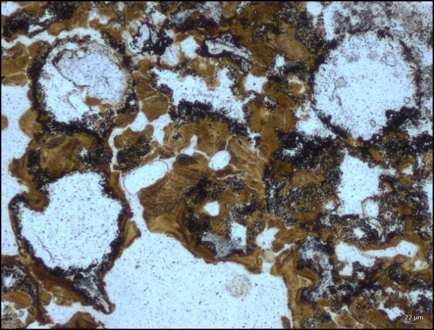 Tracce della più antica forma di vita terrestre