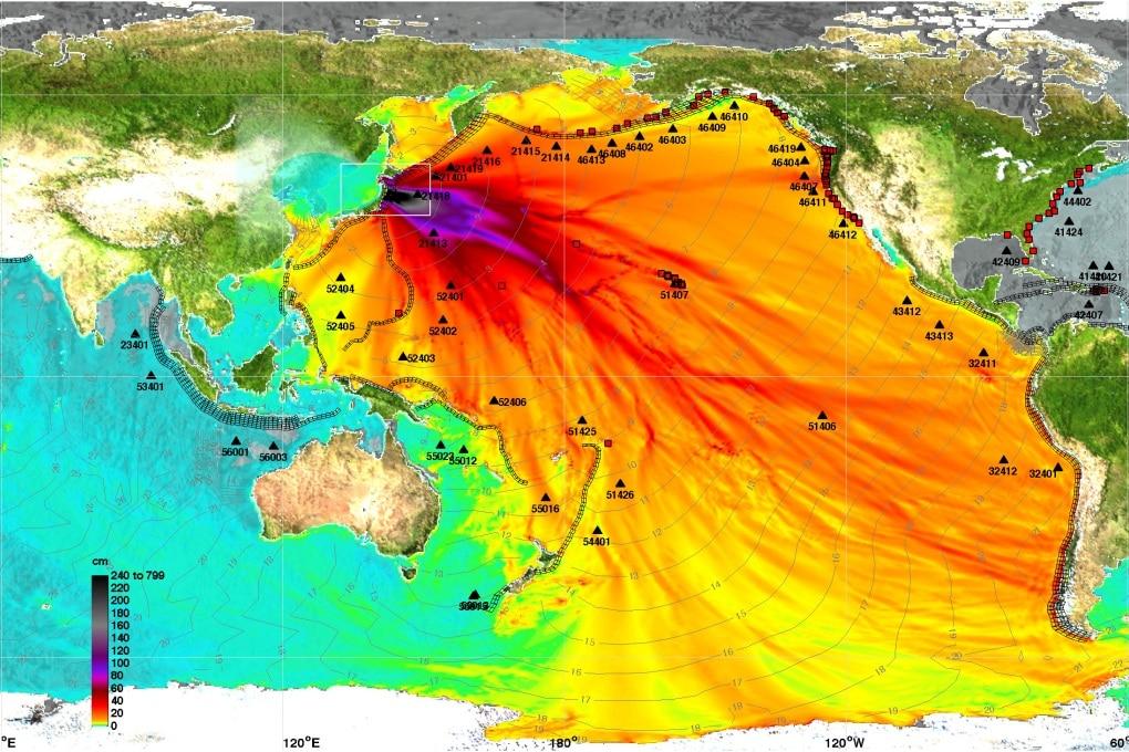 Specie aliene: dal Giappone alle Americhe dopo il terremoto del 2011