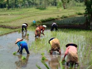 agricoltura, cibo, erbicidi, glifosato, giornata mondiale dell'ambiente 2018, sicurezza alimentare