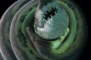tboa-constricting-croc