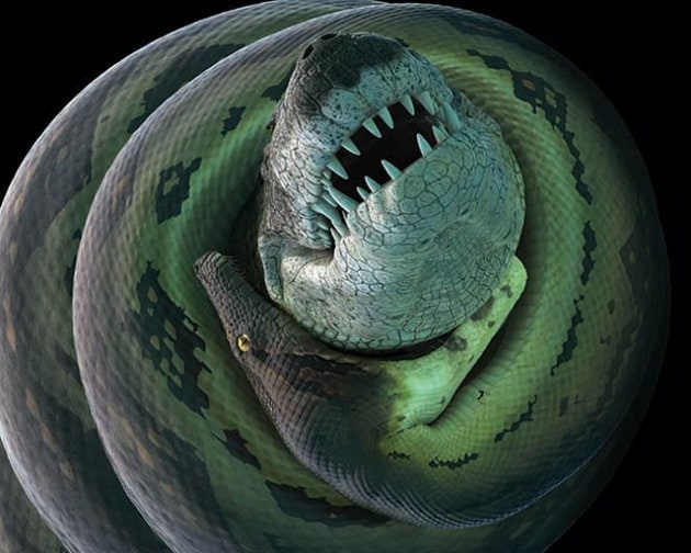 Titanoboa, il serpente gigante lungo quanto un autobus