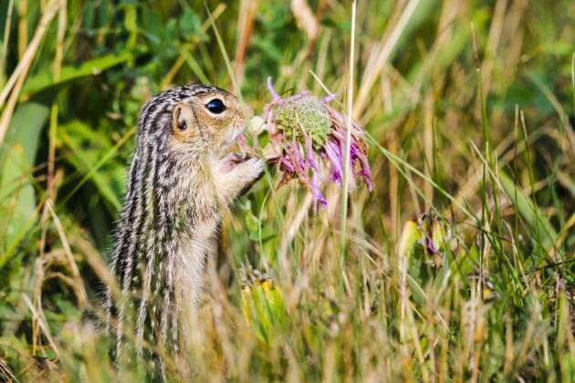 Questo scoiattolo può insegnarci qualcosa sui trapianti