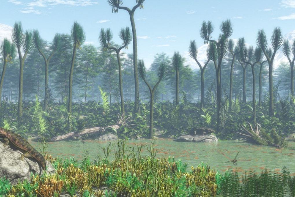 I più antichi alberi della Terra