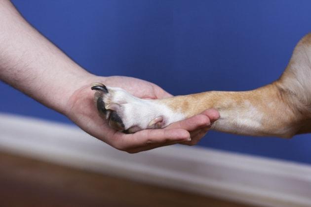 Uomo e cane, un legame scritto nei geni