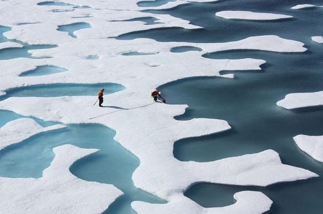 Perché l'Artico sta diventando verde?