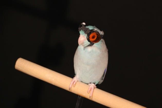 Il pappagallo con gli occhiali e i voli del futuro