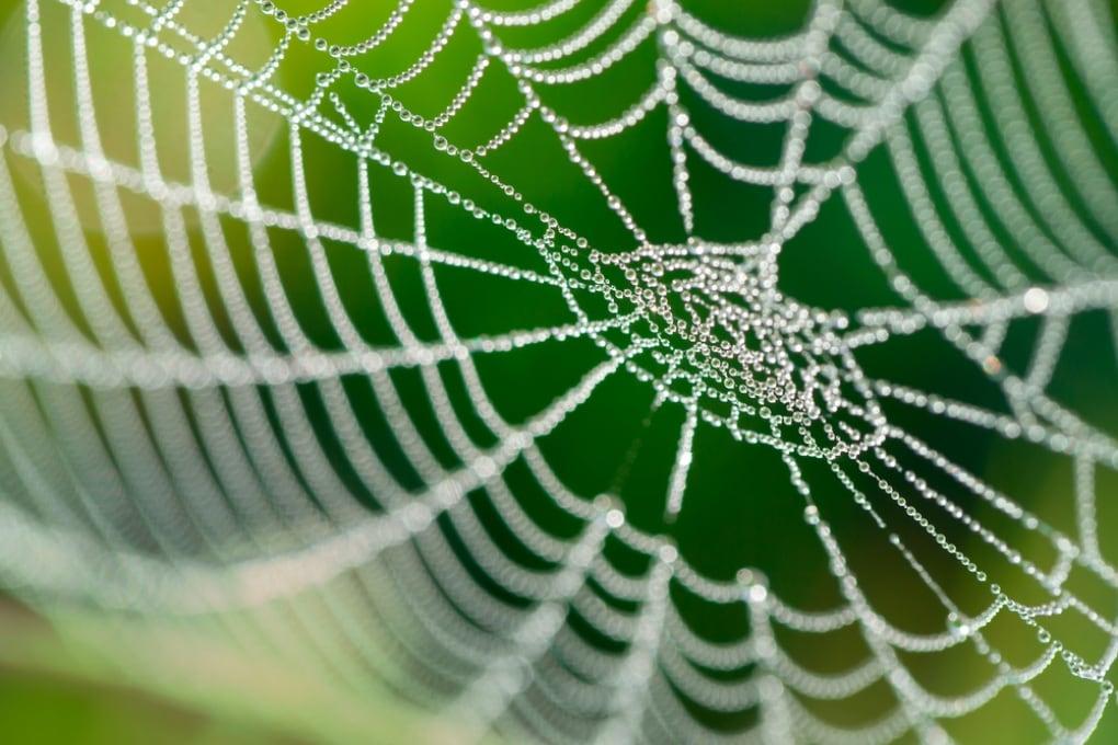 Barriere acustiche dalla tela di ragno