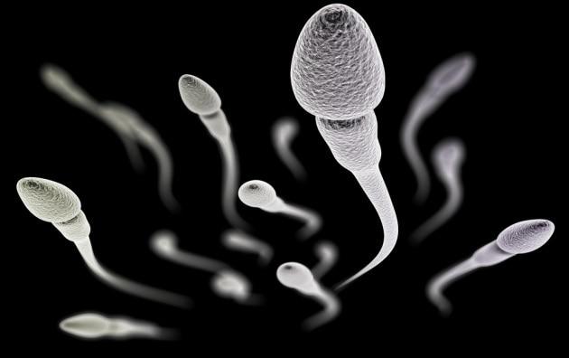 Gli spermatozoi alleati nella lotta contro il cancro