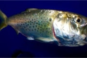 Dna ambientale per lo studio della fauna acquatica