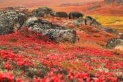 autunnoalaska
