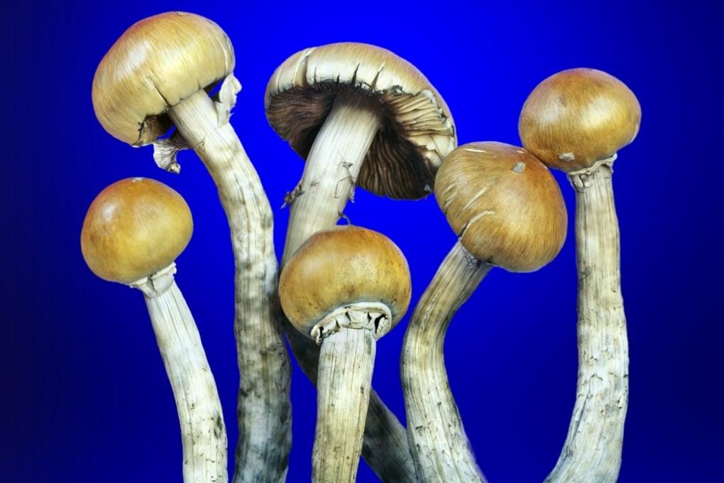 Funghi allucinogeni per chi lotta contro il cancro