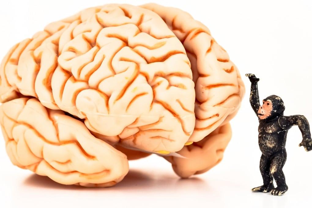 Più intelligenti degli altri primati: ringraziamo la dopamina