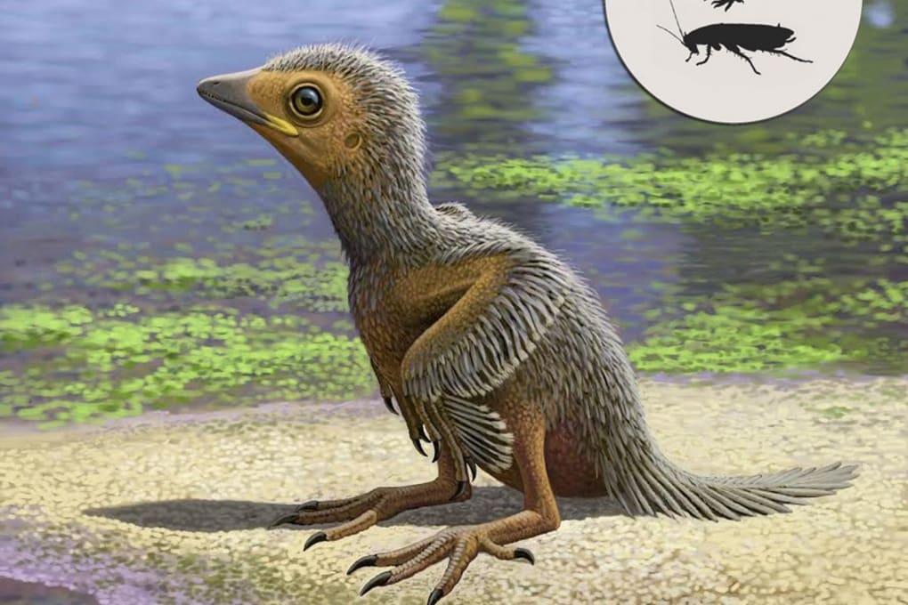 L'evoluzione degli uccelli in un pulcino di 127 milioni di anni fa