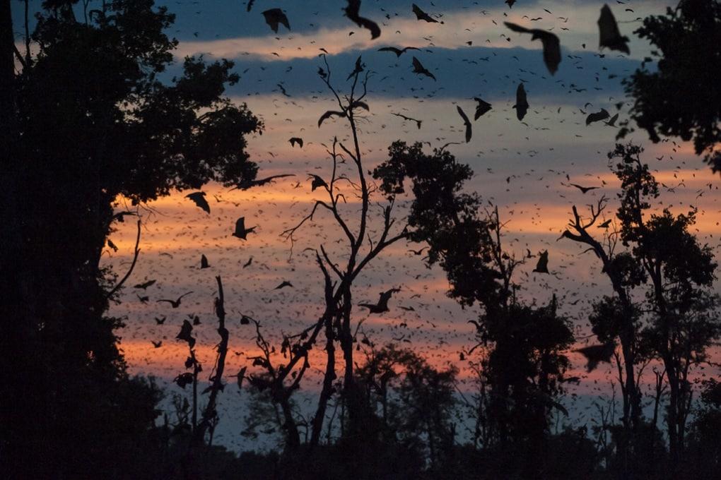 Il rapporto tra ebola e la frammentazione delle foreste