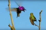 hummingbird-octopus-mask