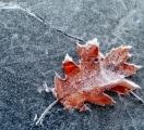 leafice
