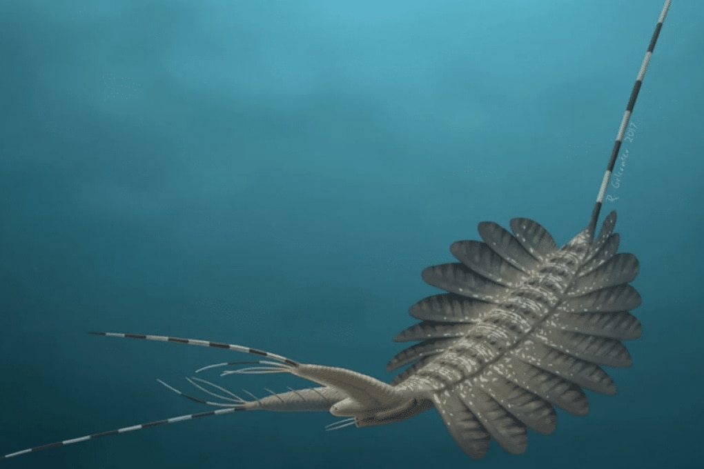 Il paleo mostro marino con occhi già complessi