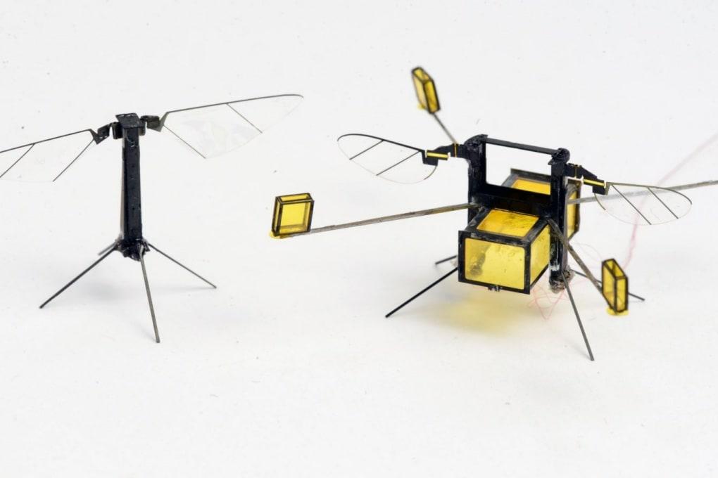 L'ape robot che non ha paura dell'acqua