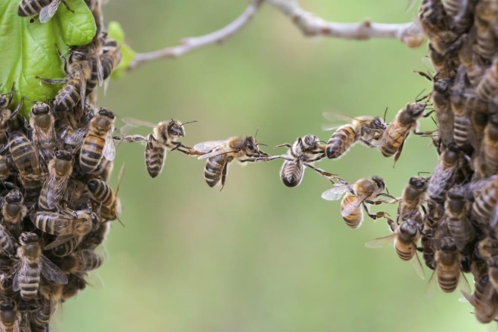 Per gli sciami di api valgono le stesse leggi del cervello umano