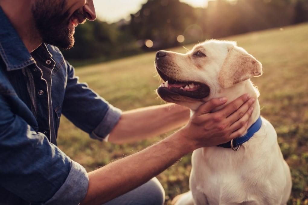 Perché i cani ci annusano le parti intime?