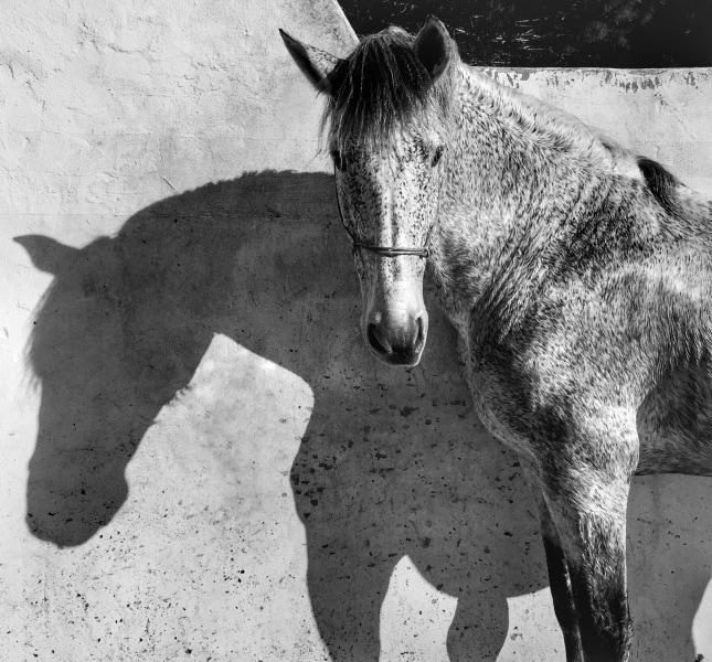 1st-animals_francesca-tonegutti