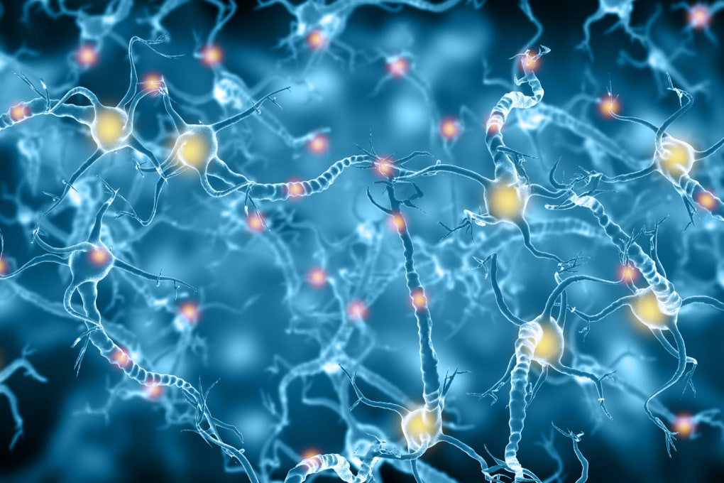 Nuovi neuroni per contrastare l'Alzheimer: il modo migliore è l'esercizio fisico