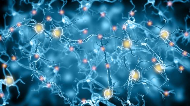 Il mormorio costante del cervello: ecco a che cosa serve