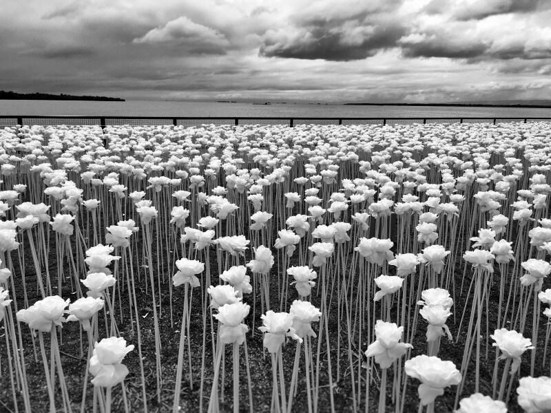 1stplace-floral_sidney-po
