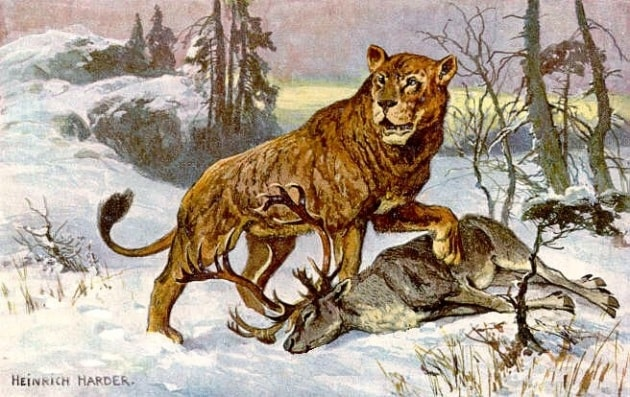 Pelli di leone come tende nell'era glaciale