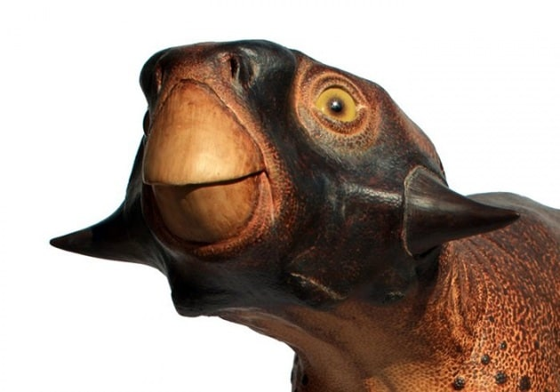 Ricostruito con grande dettaglio, anche nei colori, un dinosauro del Crataceo
