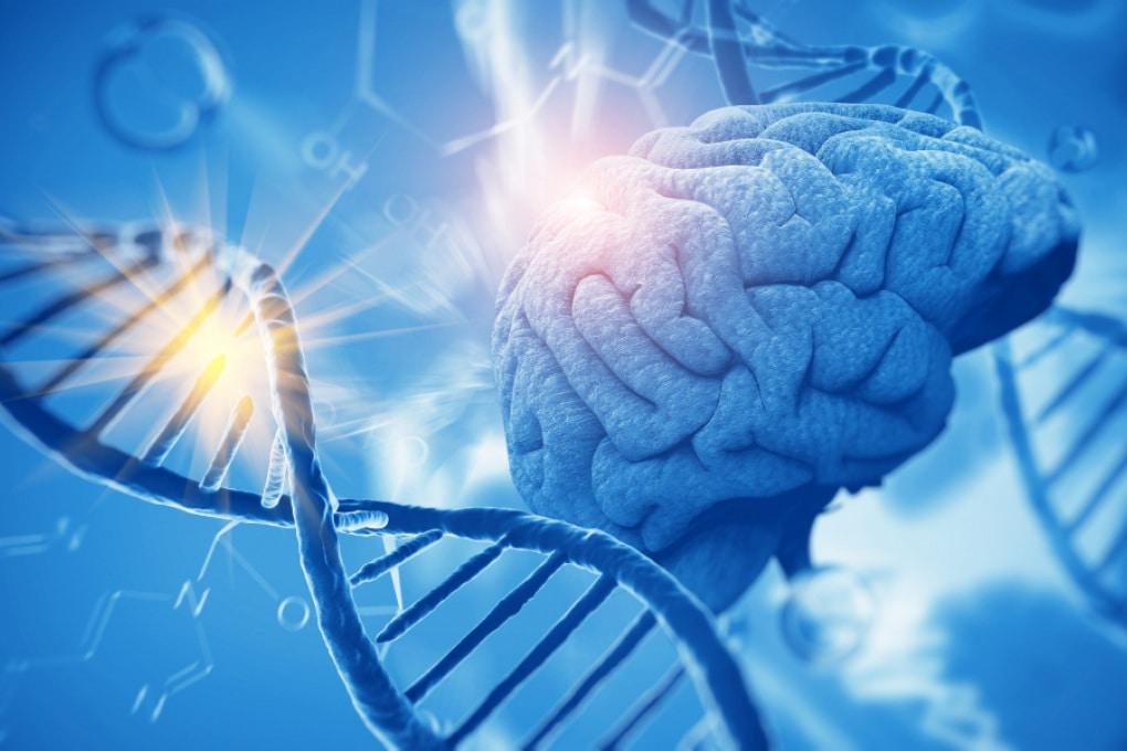 Identificati nuovi geni connessi all'intelligenza (e a due tipi di ansia)