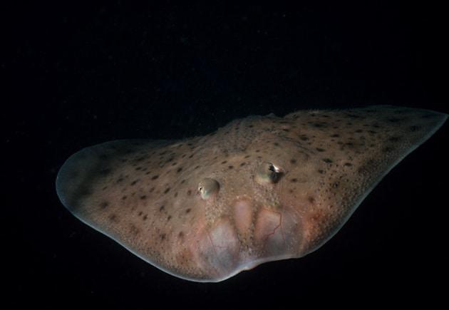 Il pesce che cammina e quello che racconta sull'evoluzione