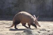 porc_formiguer