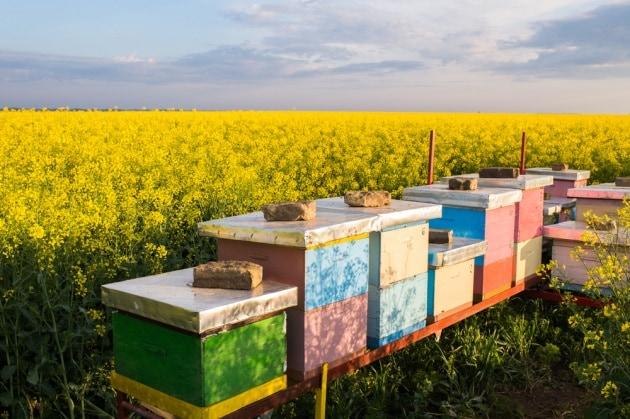 Gli insetticidi sono una minaccia per le api...