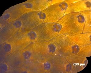 Mediterraneo, biodiversità, Watersipora arcuata, specie invasive